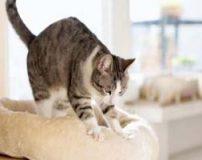 ورز دادن گربه | معنی حرکات گربه