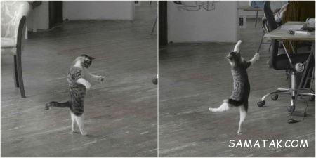 عکس های خنده دار گربه ها