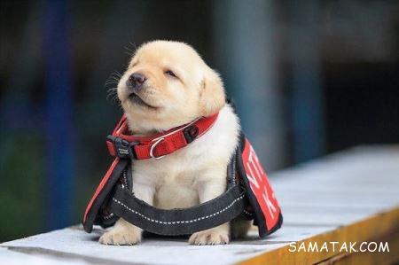 سگ های موادیاب پلیس + تصاویر