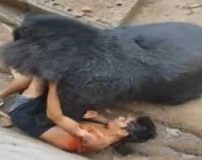 حمله خرس به انسان در باغ وحش (تصاویر 16+)