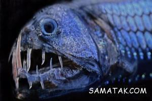 هیولاهای وحشتناک اعماق اقیانوس ها