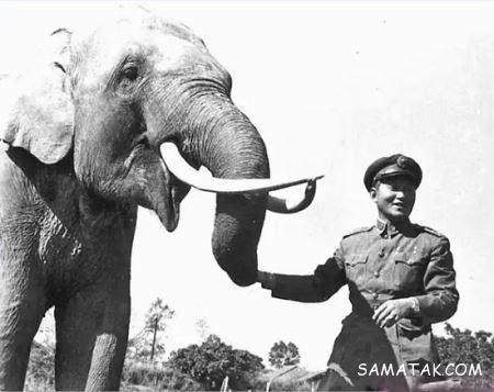 پیرترین حیوانات دنیا + تصاویر