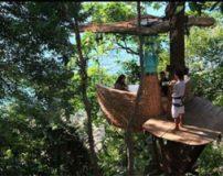 هتل رویایی بالای درخت شبیه لانه پرنده + تصاویر