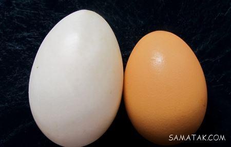 خواص تخم مرغ برای بدن و مغز انسان