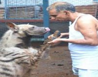 زن و شوهری که با حیوانات وحشی زندگی می کنند + تصاویر