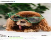 سگ های با در آمد بالا در اینستاگرام