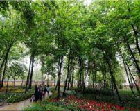 پارک های خلوت و دنج تهران برای ملاقات عاشقانه زوجین
