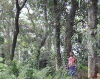 مرد هندی جنگلی که از بین رفته بود دوباره بازسازی نمود