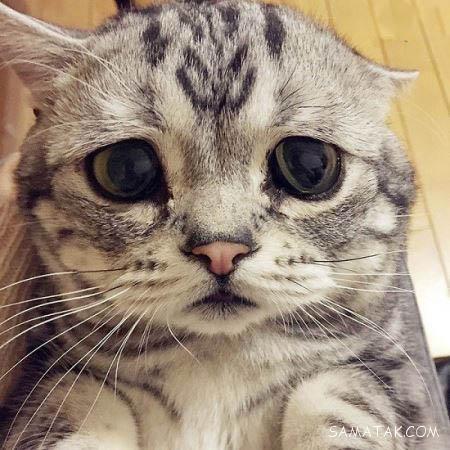 خوشگل ترین گربه با چهره دوست داشتنی در جهان
