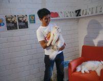 هتل 5 ستاره برای اقامت گربه ها شبی 150 هزار تومان + تصاویر