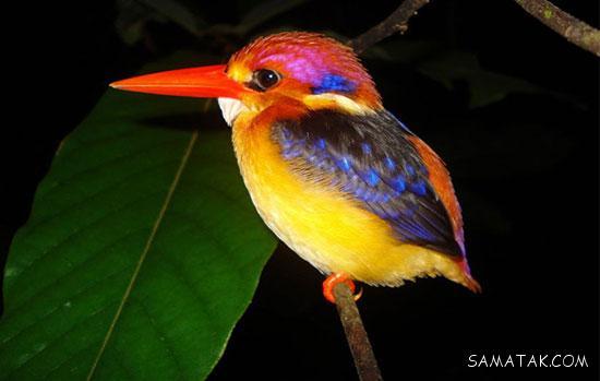 معرفی خصوصیات زیباترین حیوانات دنیا + تصاویر