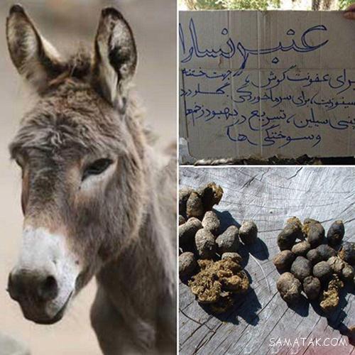 فیلم جفت ري حيوانات با انسان خواص مدفوع الاغ (عنبر نسارا) برای بدن انسان