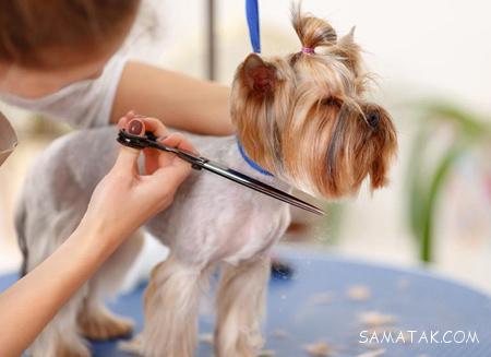آموزش اصولی ترین روشهای مراقبت و نگهداری از سگ ها