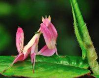 حشرات زیبای دنیا بر اساس طبقه بندی + تصاویر