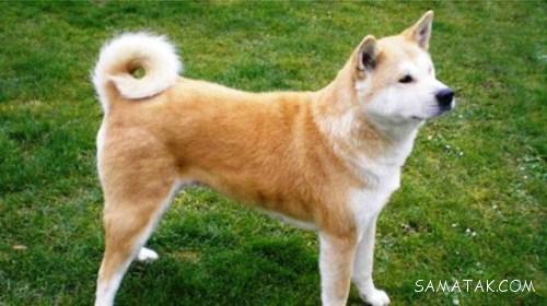 وحشی ترین نژادهای سگ در جهان