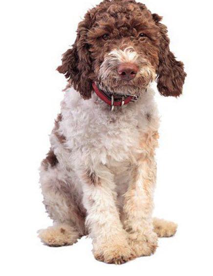 قیافه خنده دار عجیب ترین سگ های دنیا