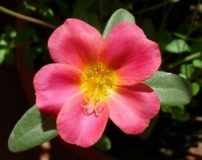 بزرگترین آلبوم عکس گل های زیبای جهان