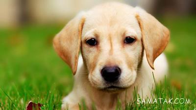 طالع بینی مرد متولد سال سگ + طالع بینی زن متولد سال سگ