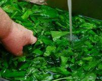 روشهای ضدعفونی کردن، گندزدایی و شستن سبزی