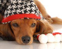 آموزش نگهداری حیوانات خانگی در سرمای زمستان