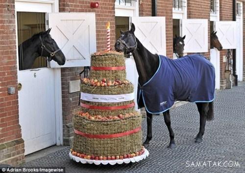 مجلل ترین جشن تولد جهان برای اسب های گران قیمت