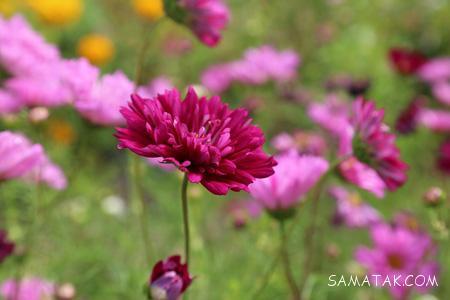 عکسهای گلهای زیبای جهان + تصاویر گلهای زیبا