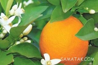 فواید آب نارنج چیست