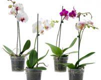 طرز نگهداری گل ارکیده | شرایط نگهداری گل ارکیده در آپارتمان