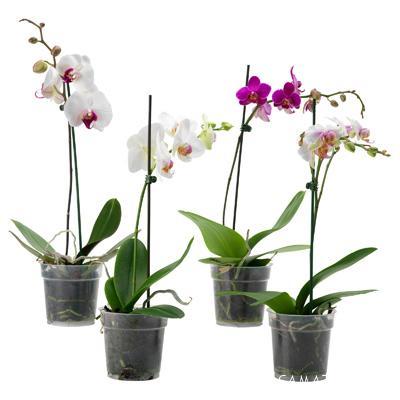 طرز نگهداری گل ارکیده   شرایط نگهداری گل ارکیده در آپارتمان