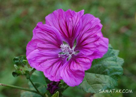 گیاهان عفونت کش   گیاهان ضد عفونت بدن