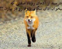 عکس نوشته های دورویی و دورنگی آدما برای پروفایل