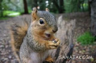 سنجاب چگونه حیوانی است   همه چیز راجع به سنجاب