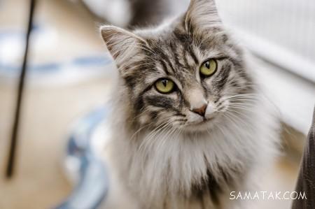 تعبیر خواب حمله گربه به انسان