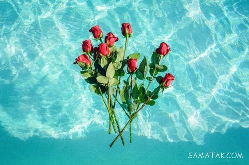 عکس گل رز قرمز، آبی، زرد، صورتی، مشکی، سفید 2019 - 98