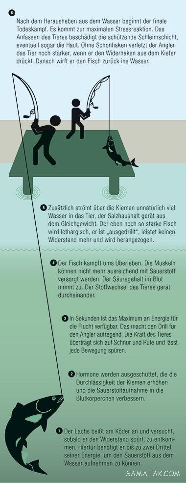 آموزش ماهیگیری و صید انواع ماهی با قلاب