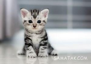 تعبیر خواب گربه سیاه، سفید، مرده، وحشی، مریض و بزرگ