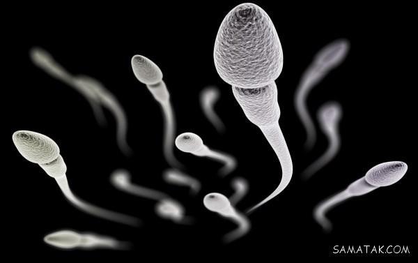 اطلاعات درباره اسپرم مردان + معلومات درباره اسپرم انسان