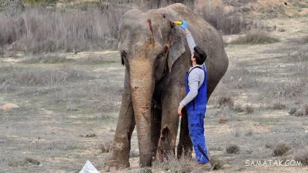 تعبیر خواب فیل و بچه فیل | تعبير خواب فيل چيست