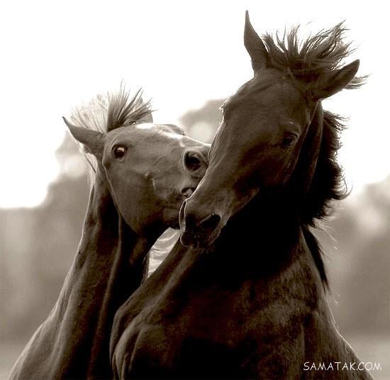 عکس های عاشقانه از رابطه زناشویی حیوانات (72عکس)