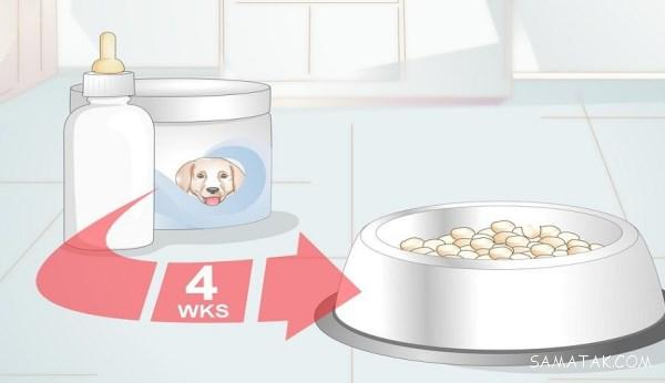 نحوه غذا دادن به توله سگ بدون مادر | غذای توله سگ بی مادر