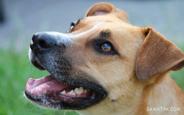 درمان سريع اسهال سگ بالغ و توله سگ | غذای مناسب برای اسهال سگ