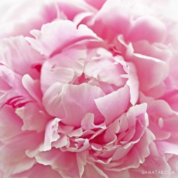 کاملترین مرجع تعبیر خواب دیدن گل در خواب از دیدگاه معبران بزرگ