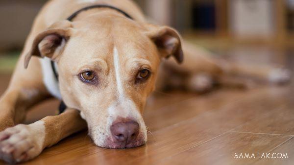 تعبیر خواب سگ سیاه، سفید، قهوه ای، بزرگ | تعبیر خواب سگ مرده چیست