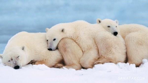 چگونگی خواب حیوانات حیات وحش | حیوانات چگونه می خوابند