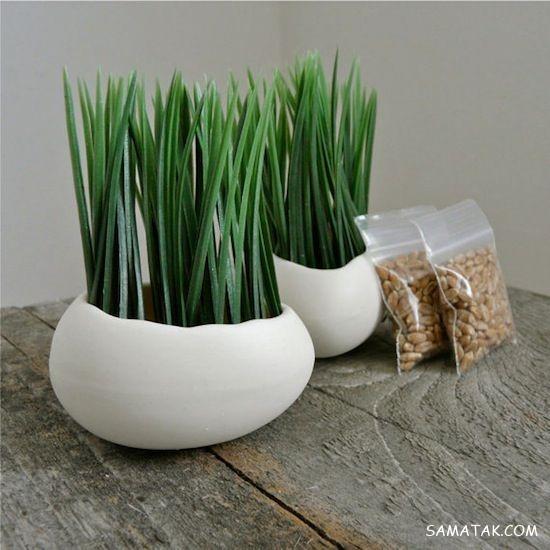 روش کاشت هسته خرما برای سبزه عید   آموزش کاشت سبزه عید با هسته خرما