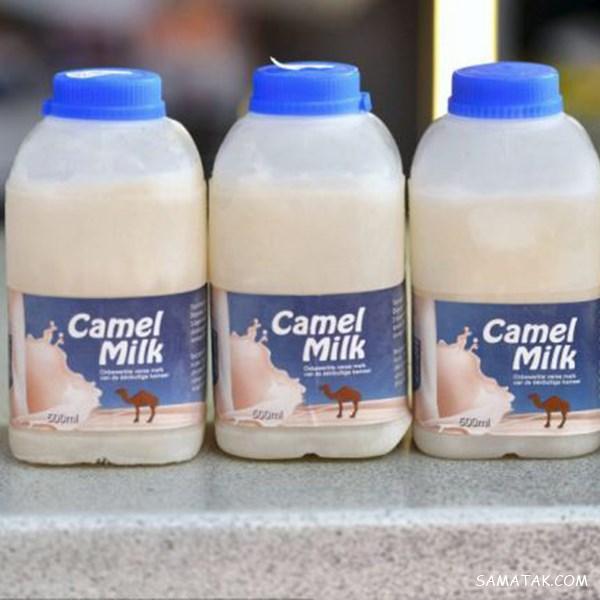 خواص شیر شتر برای ریه - پوست - دیابت - معده   تفاوت شیر شتر با گاو