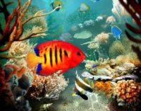 بهترین ماهی آکواریومی برای تکثیر | بهترین ماهی برای تکثیر در آکواریوم