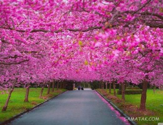 انشا با موضوع فصل بهار | انشا ادبی درباره فصل بهار
