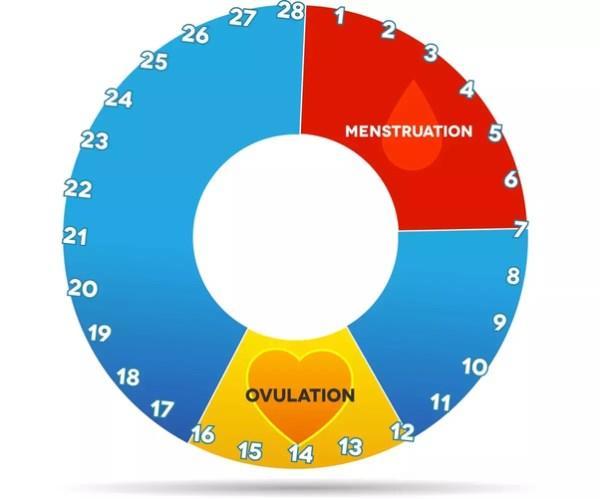 احتمال بارداری قبل، حین و بعد از پریود | احتمال بارداری در زمان پریودی چند درصد است