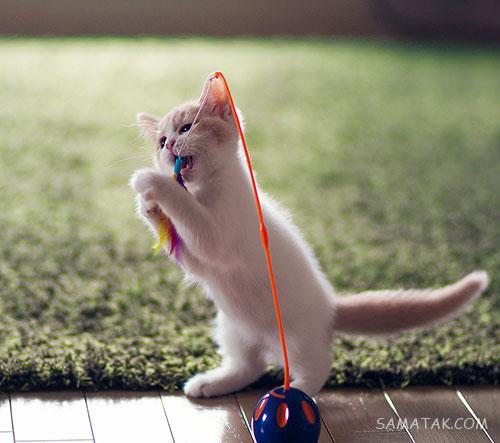 60 عکس گربه زیبا برای پروفایل و تصویر زمینه گوشی hd